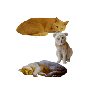 猫文字コ_batch.png