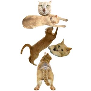猫文字ネ_batch.png