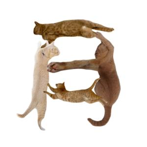 猫文字月_batch.png