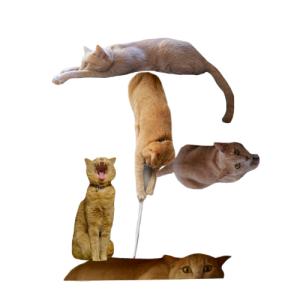 猫文字正_batch.png